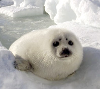 198x176_seal_bskerry