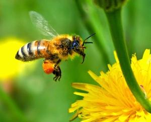 bee(3).jpg